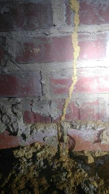 Evidence of active termite tube