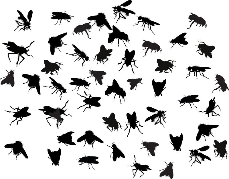 Clint Miller Blog Types of Flies
