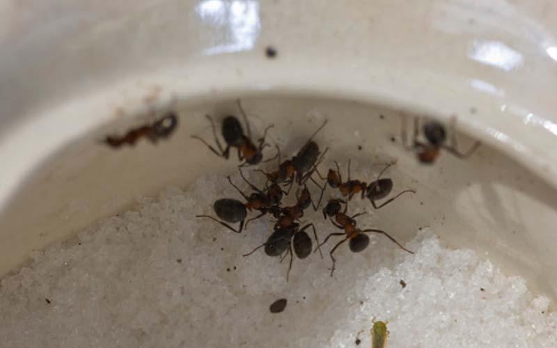 DIY_Ants