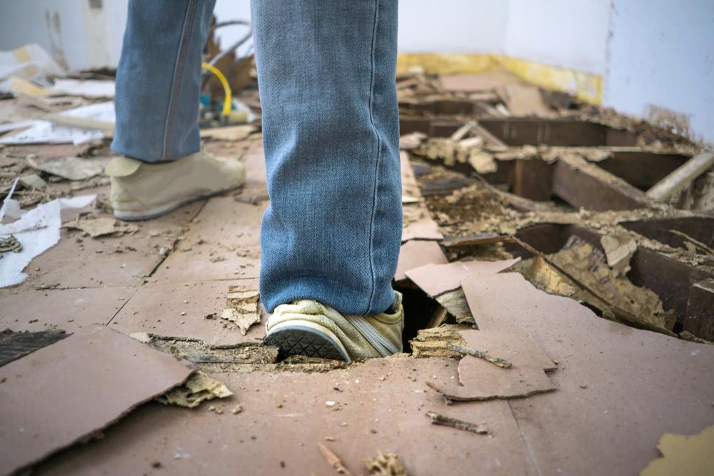 How Destructive Are Termites