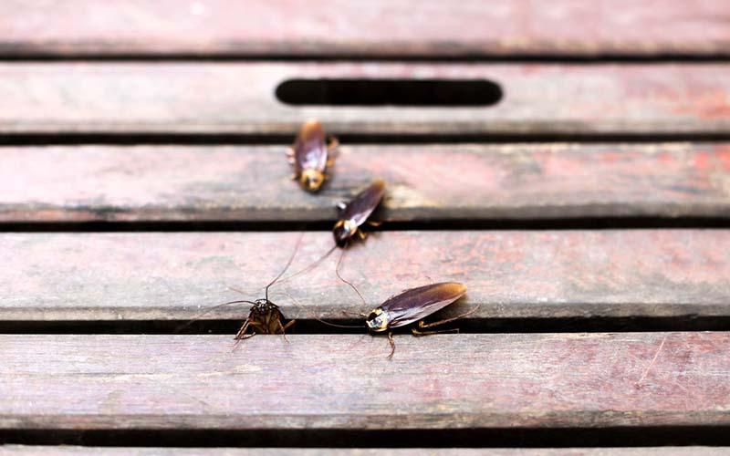Roaches-1