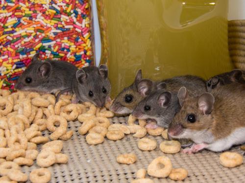 Clint Miller Exterminating Rodent Control