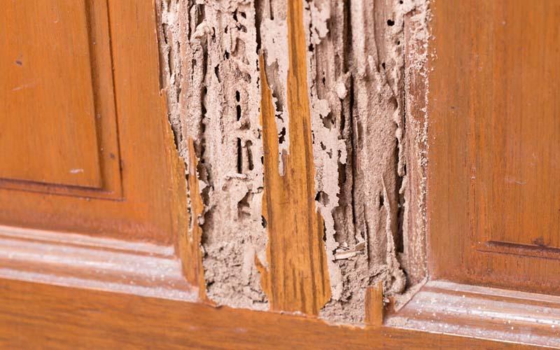 Termite_Damage-1