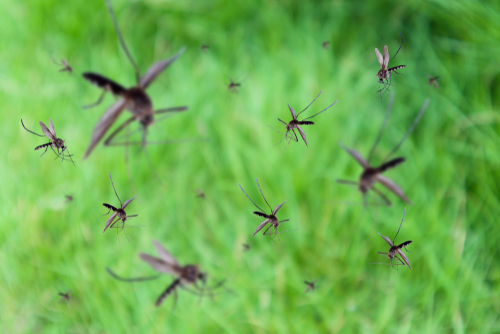 Clint Miller Mosquito Control