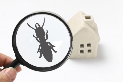 Signs of termites vs carpenter ants