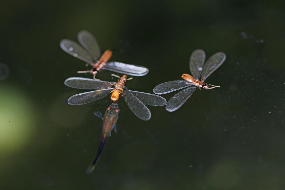 springTime.termitesSwarm